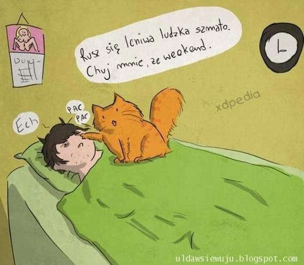 Kot: Rusz się leniwa ludzka szmato. Chuj mnie, że weekend.