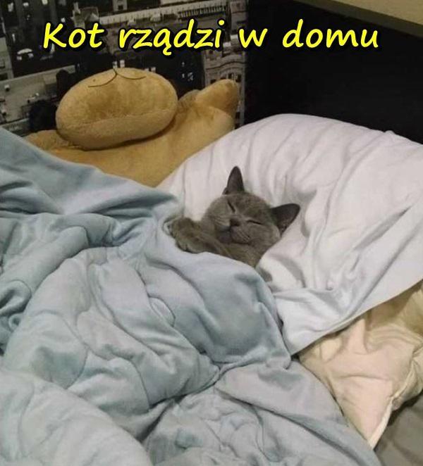 Kot rządzi w domu