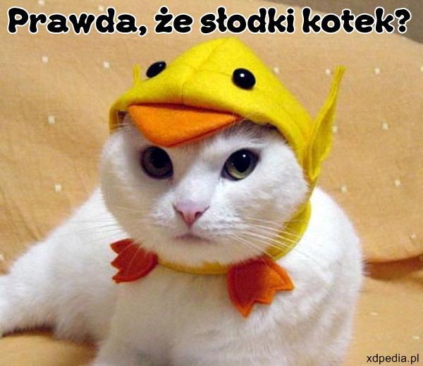 Prawda, że słodki kotek?