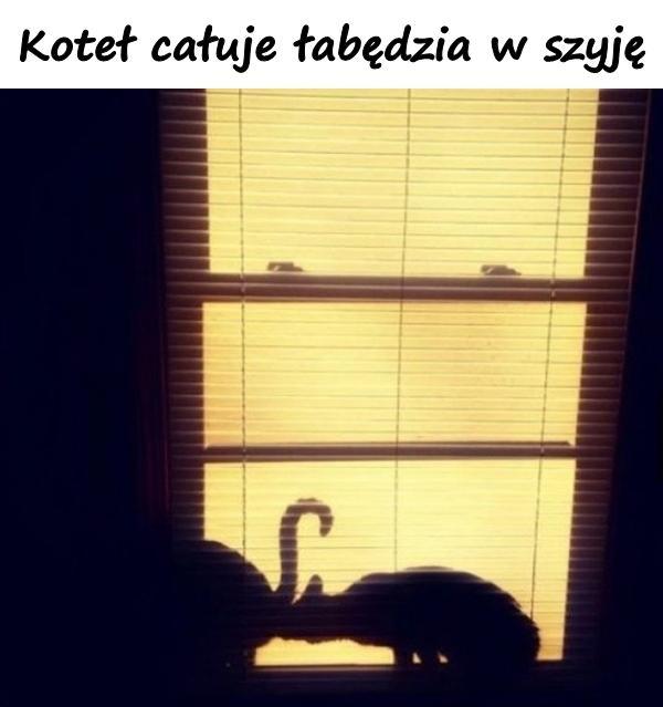 Koteł całuje łabędzia w szyję