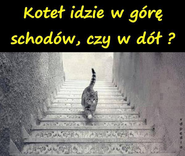 Koteł idzie w górę schodów, czy w dół?