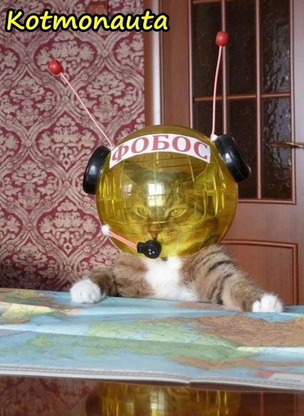 Kotmonauta - pierwszy kot w kosmosie