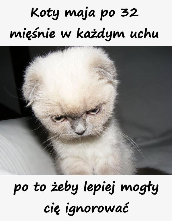 Koty maja po 32 mięśnie w każdym uchu po to żeby lepiej mogły cię ignorować