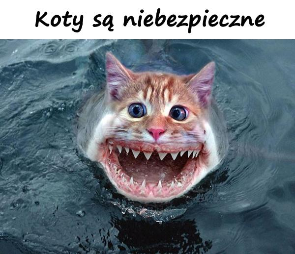 Koty są niebezpieczne