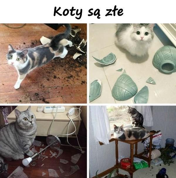 Koty są złe