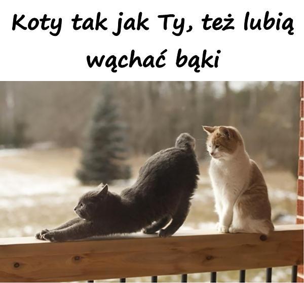 Koty tak jak Ty, też lubią wąchać bąki