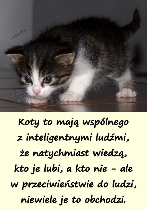 Koty Vs Inteligentni Ludzie Xdpedia 7818
