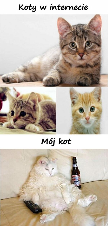 Koty w internecie i mój kot