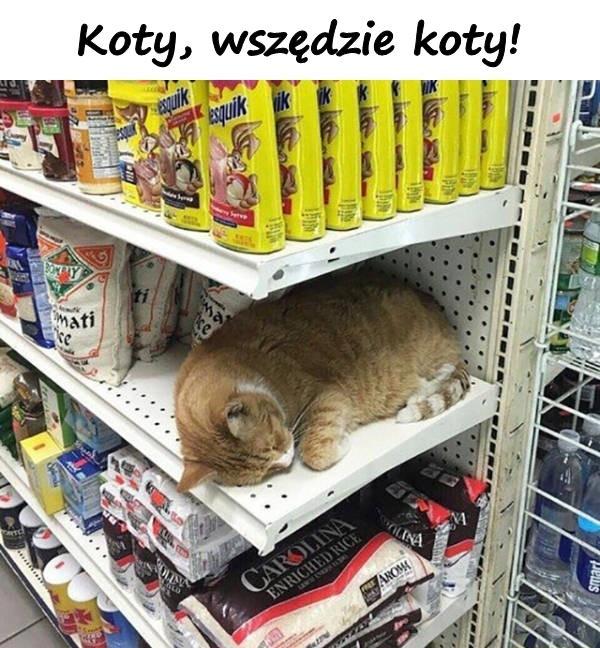Koty, wszędzie koty!