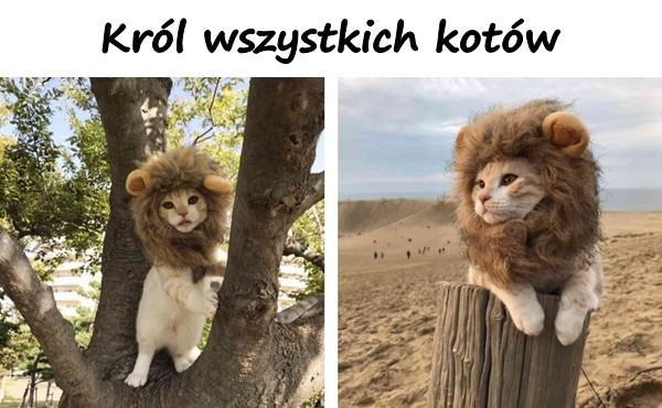 Król wszystkich kotów!