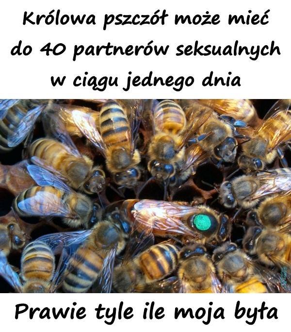 Królowa pszczół może mieć do 40 partnerów seksualnych w ciągu jednego dnia. Prawie tyle ile moja była.