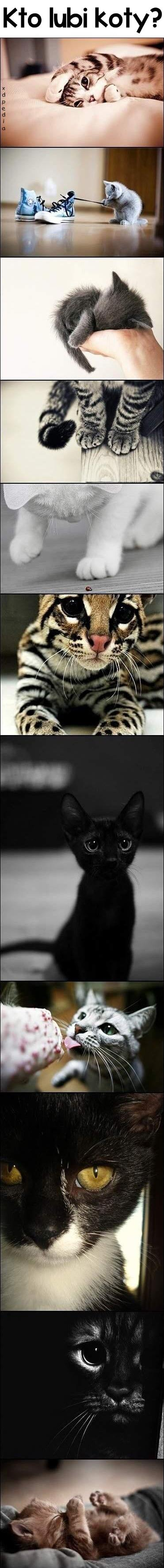 Kto lubi koty?