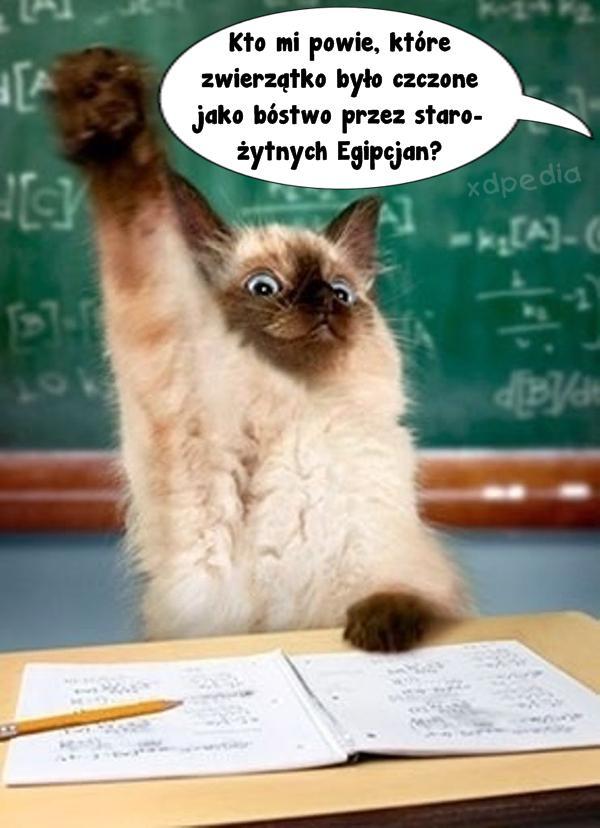 Kto mi powie, które zwierzątko było czczone jako bóstwo przez starożytnych Egipcjan?