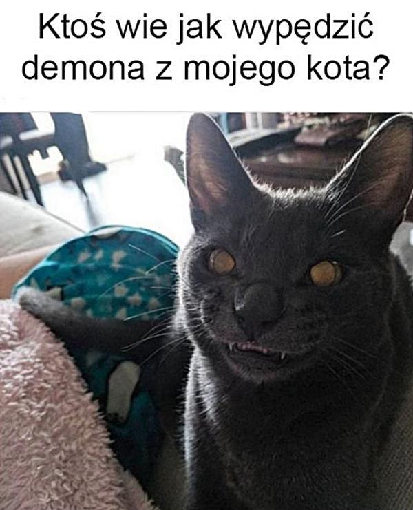 Ktoś wie jak wypędzić demona z mojego kota?