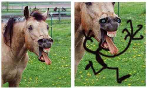 Koń z którego powstał potwór.