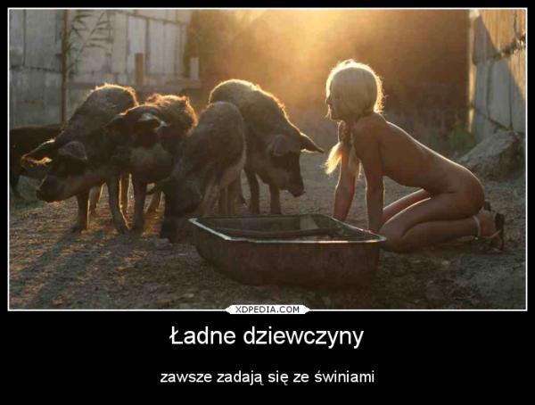 Ładne dziewczyny zawsze zadają się ze świniami