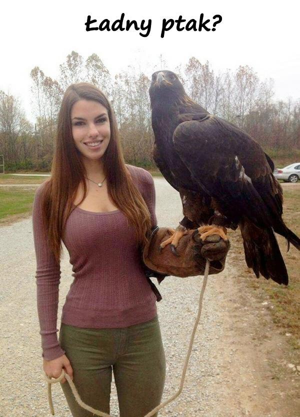 Ładny ptak?