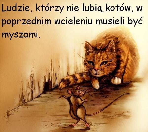 Ludzie, którzy nie lubią kotów, w poprzednim wcieleniu musieli być myszami.