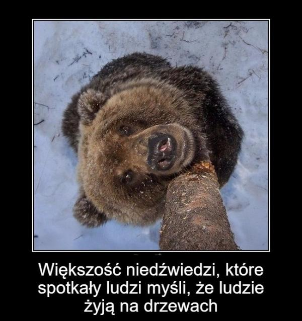 Większość niedźwiedzi, które spotkały ludzi myśli, że ludzie żyją na drzewach.