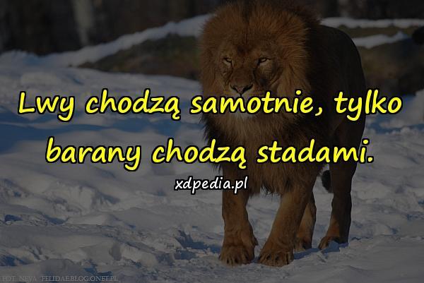 Lwy chodzą samotnie, tylko barany chodzą stadami.