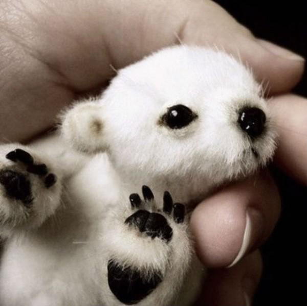 Mały miś polarny