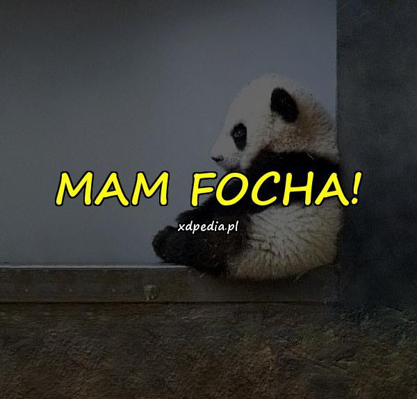 MAM FOCHA!