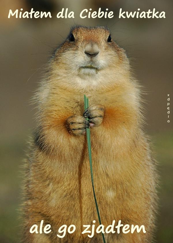 Miałem dla Ciebie kwiatka, ale go zjadłem