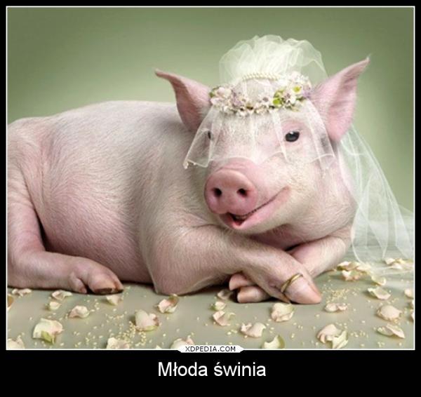 Młoda świnia