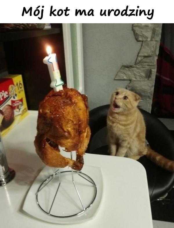 Mój kot ma urodziny