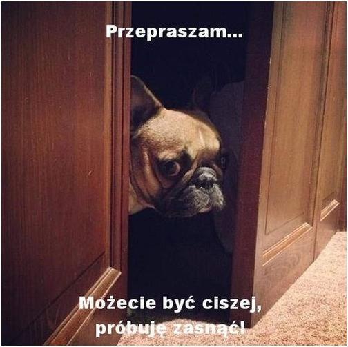 Przepraszam... Możecie być ciszej, próbuję zasnąć!
