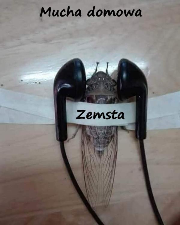 Mucha domowa - zemsta