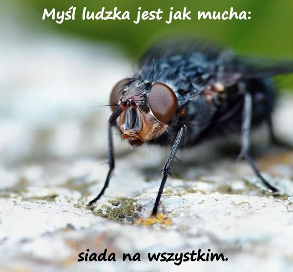 Myśl ludzka jest jak mucha: siada na wszystkim.