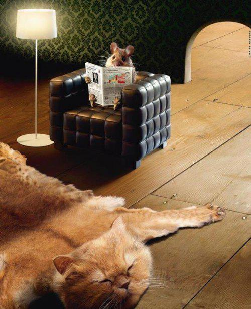 Mysz vs. kot - wykładzina z kota