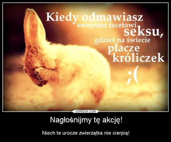 Kiedy odmawiasz swojemu facetowi seksu, gdzieś na świecie płacze króliczek ;( Nagłośnijmy tę akcję! Niech te urocze zwierzątka nie cierpią!
