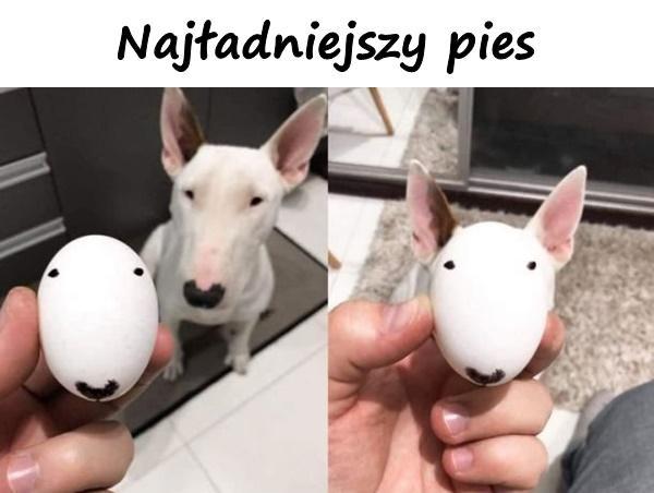 Najładniejszy pies