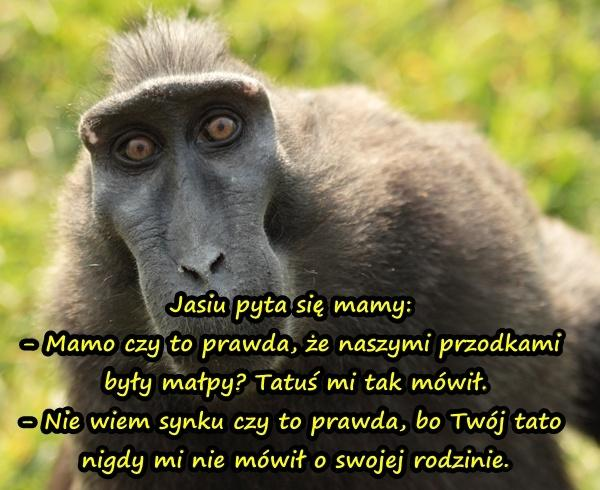 Jasiu pyta się mamy: - Mamo czy to prawda, że naszymi przodkami były małpy? Tatuś mi tak mówił. - Nie wiem synku czy to prawda, bo Twój tato nigdy mi nie mówił o swojej rodzinie.