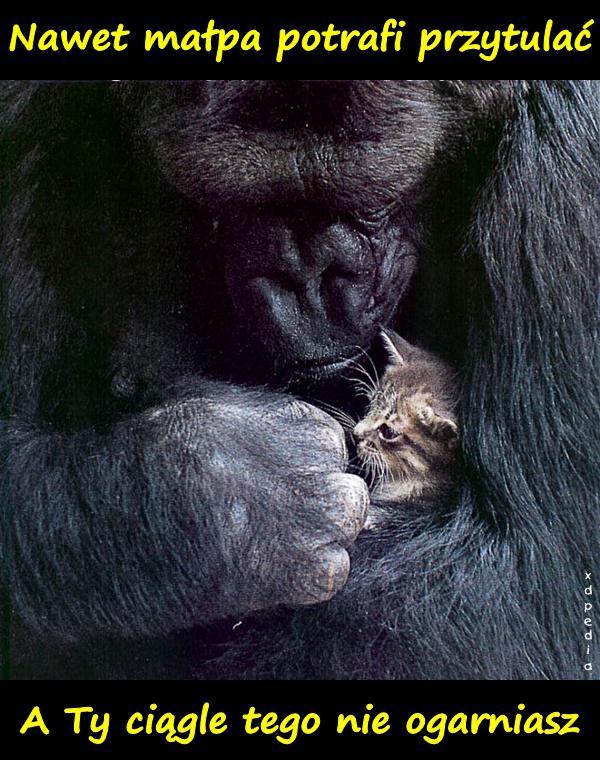 Nawet małpa potrafi przytulać. A Ty ciągle tego nie ogarniasz.