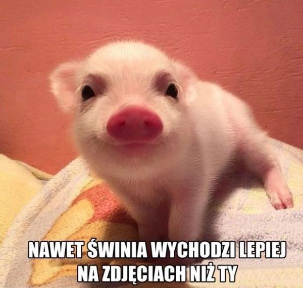 Nawet świni wychodzi na zdjęciach lepiej niż ty