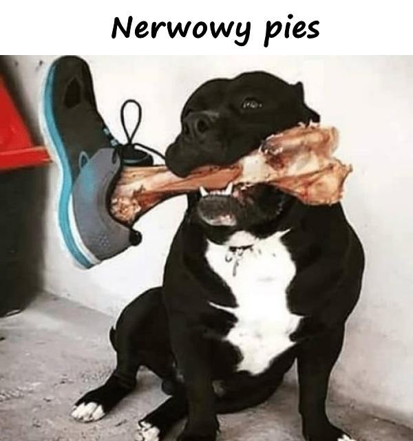 Nerwowy pies