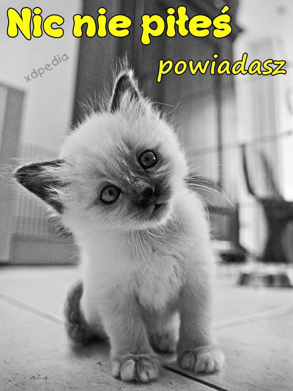 Nic nie piłeś, powiadasz Tagi: kwejk, kot, kociak, memy, kotek, picie, żona, mem, kobieta, weekend, impreza, zgon, powroty, łikend, słodziak, tłumaczenie.