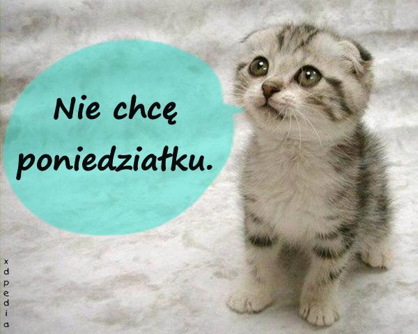 Praca Humor Poniedziałek Mem Kotek śmieszne Obrazki Besty Kot