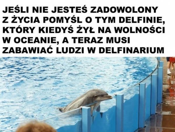 Jeśli nie jesteś zadowolony z życia pomyśl o tym delfinie, który kiedyś żył na wolności w oceanie, a teraz musi zabawiać ludzi w delfinarium.