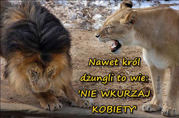 Nawet król dżungli to wie: NIE WKURZAJ KOBIETY!