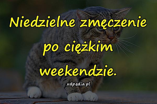 Niedzielne zmęczenie po ciężkim weekendzie.