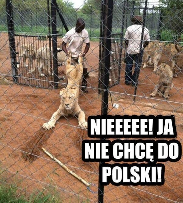 Nieeee! Ja nie chcę do Polski!