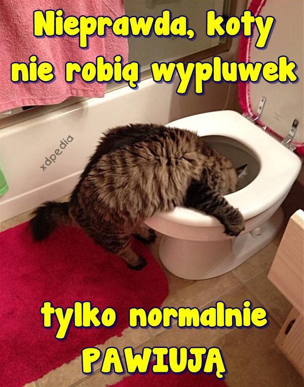 Nieprawda, koty nie robią wypluwek, tylko normalnie PAWIUJĄ