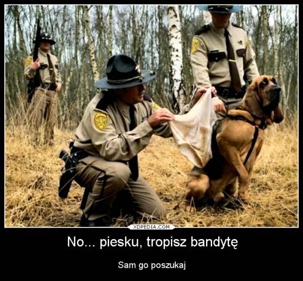 No... piesku, tropisz bandytę Sam go poszukaj