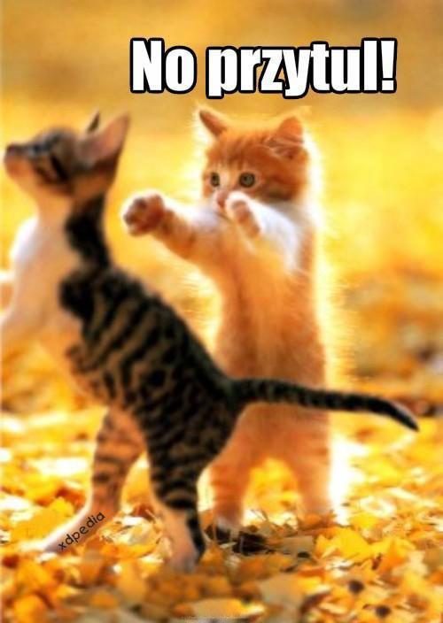 No przytul!