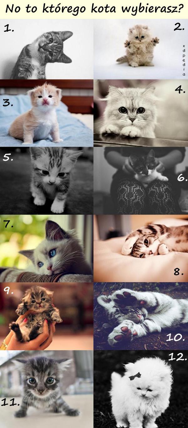 No to którego kota wybierasz?