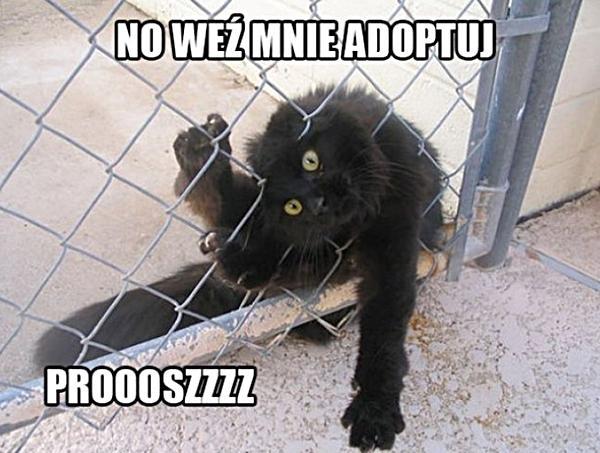 No weź mnie adoptuj